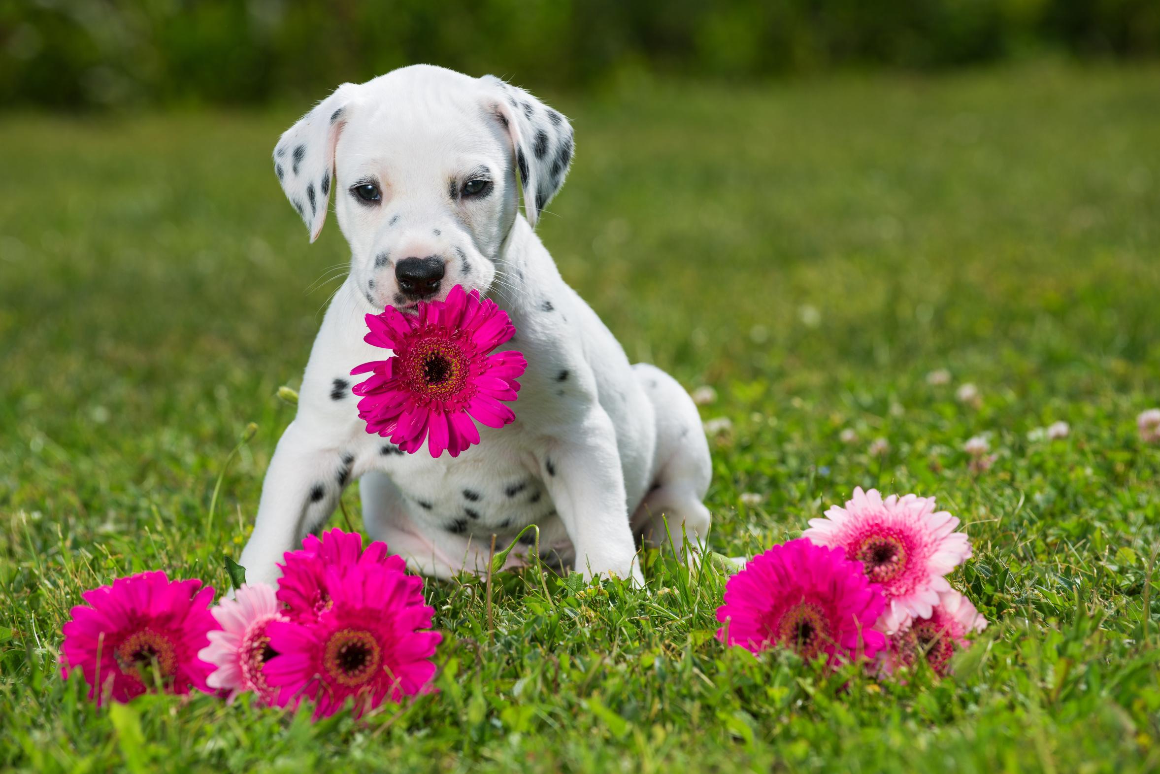 Azubiflüsterer kommunizieren nicht durch die Blume